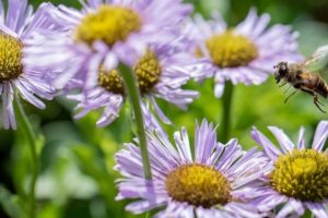 Image for Members Only Online Plant Sales with Curbside Pickup